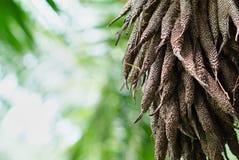 开花油棕榈树 库存图片