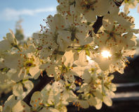 开花浪花在日落前面的 免版税库存照片