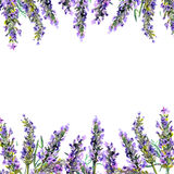 开花淡紫色 水彩框架 皇族释放例证