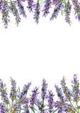 开花淡紫色 水彩边界 向量例证