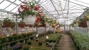 开花温室植物销售额 库存图片