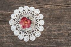 开花漂浮在木桌背景的玻璃 库存图片