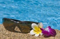 开花热带的太阳镜 库存照片