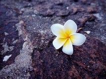 开花热带的杏仁奶油饼 免版税库存图片