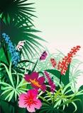 开花热带 向量例证