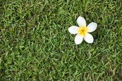 开花热带 库存图片