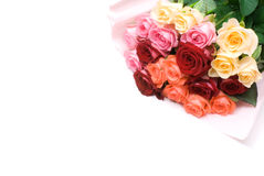 开花玫瑰色 库存图片