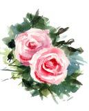 开花玫瑰 库存照片