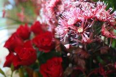开花玫瑰 图库摄影