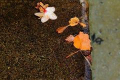 开花瓣去在小河的边缘 库存图片