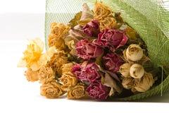 开花瓣玫瑰 库存照片