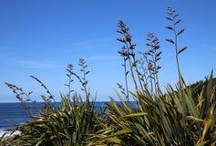 开花由海洋的新西兰Harakeke胡麻 库存图片