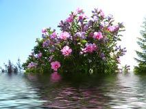 开花百合桃红色被反射的水 图库摄影
