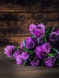 开花的三叶草花束在木背景的 免版税库存照片