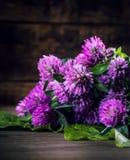 开花的三叶草花束在木背景的 免版税图库摄影