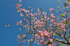 开花的丝绸绣花丝绒结构树 免版税库存照片