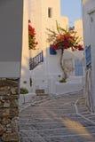 开花的九重葛在希腊 免版税库存照片