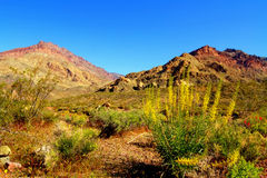 开花的五颜六色的死亡沙漠开花谷 免版税图库摄影