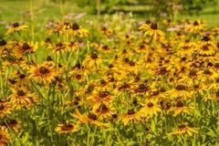 开花的五颜六色的花圃 库存图片