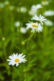 开花的五颜六色的花圃 免版税库存照片