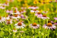 开花的五颜六色的花圃 库存照片