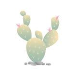 开花的仙人掌 免版税图库摄影