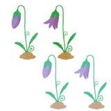 开花的会开蓝色钟形花的草 库存图片