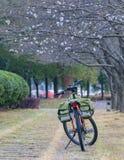 开花的佐仓在3月 免版税库存照片