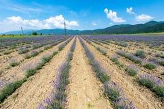 开花的保加利亚淡紫色行  免版税库存照片