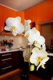 开花的兰花分支在豪华厨房里 免版税库存图片