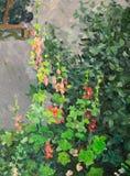 开花的冬葵 免版税图库摄影
