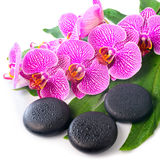 开花的分支美丽的温泉静物画剥离了紫罗兰色orch 库存照片