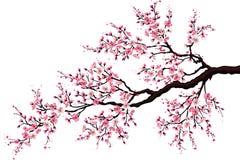 开花的分行樱桃 库存例证