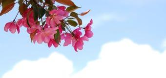 开花的分行 免版税图库摄影