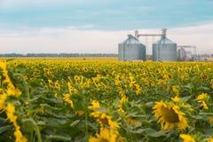 开花的向日葵和电梯 免版税库存图片