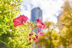 开花的城市 库存照片