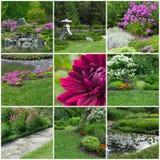 开花的夏天庭院 库存照片