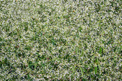 开花的大戟属植物背景  库存照片