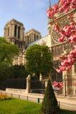 开花的大教堂贵妇人notre巴黎结构树 库存照片