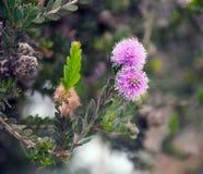 开花的宏观结构树 免版税图库摄影