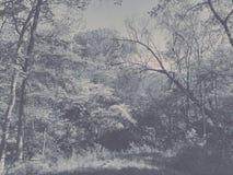 开花的山茱萸树 库存图片