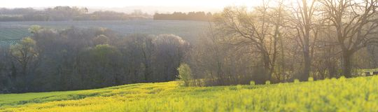 开花的年轻李子庭院和油菜籽领域,顶视图 图库摄影