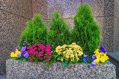 开花的床在费城市中心 库存照片