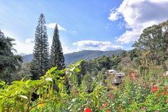 开花的庭院和山风景  免版税库存照片