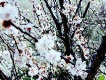 开花的庭院辉煌和芳香  库存照片