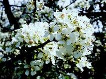 开花的庭院辉煌和芳香  图库摄影