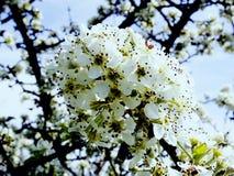 开花的庭院辉煌和芳香  免版税库存图片