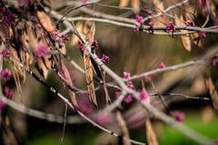 开花的庭院 免版税图库摄影
