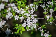 开花的庭院 库存照片