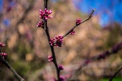 开花的庭院 免版税库存图片